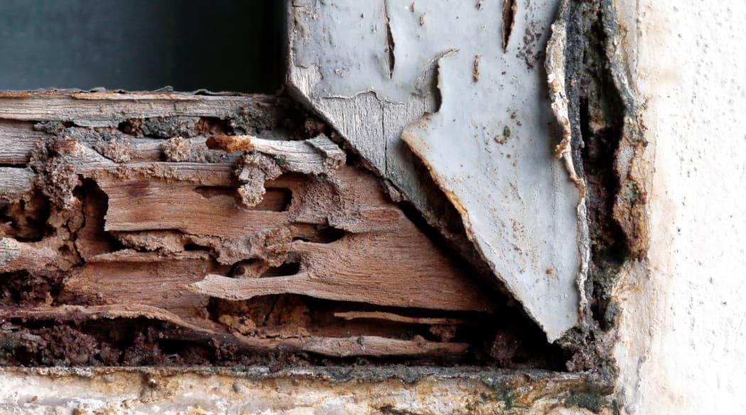 Ein von Holzwürmern zerfressener Fensterrahmen