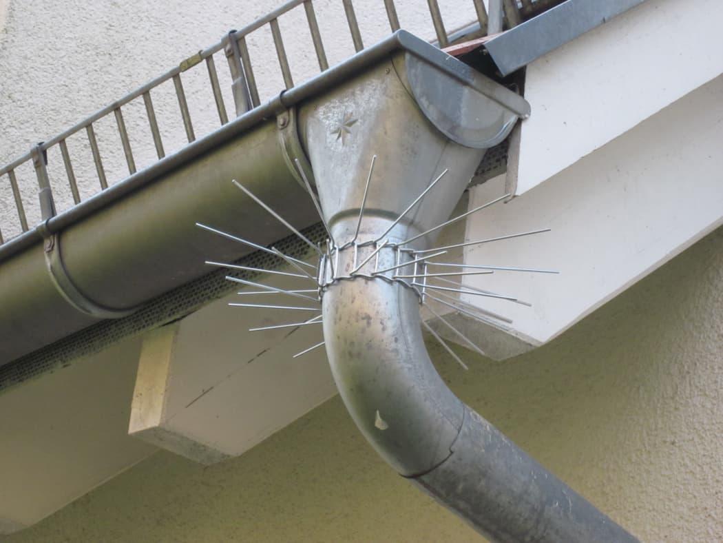 Eine Dachrinne und ein Fallrohr mit Marderabwehrgürtel