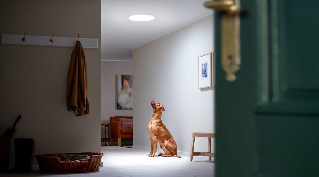 Ein Hund blickt auf zu einem Velux-Tageslichtspot in der Decke