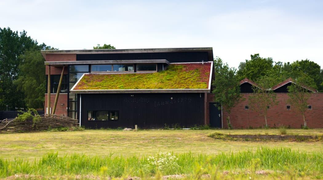 Ein Pultdach mit Dachbegrünung.