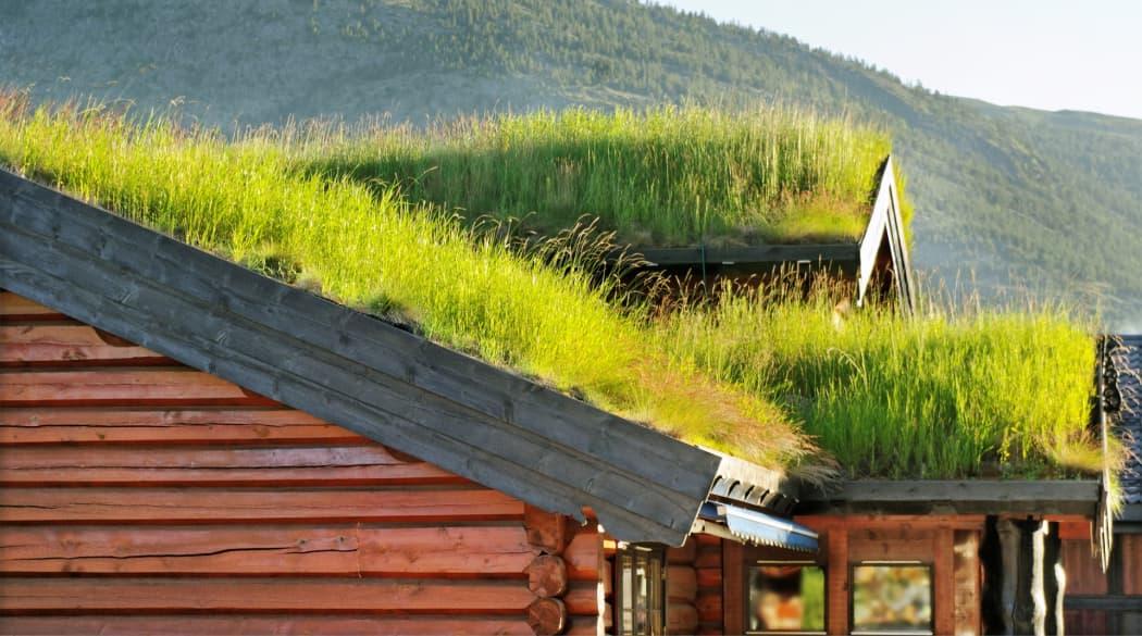 Dachbegrünung Pflanzen: Ein Haus mit Grasdach