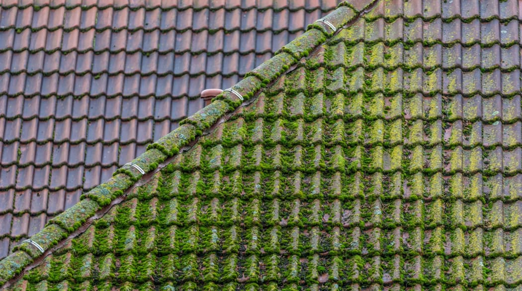 Dachbeschichtung: im Vordergrund ein Dach mit Moosbewuchs, im Hintergrund ein gereinigtes Dach