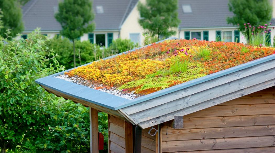 Dachbegrünung auf einem Gartenhäuschen