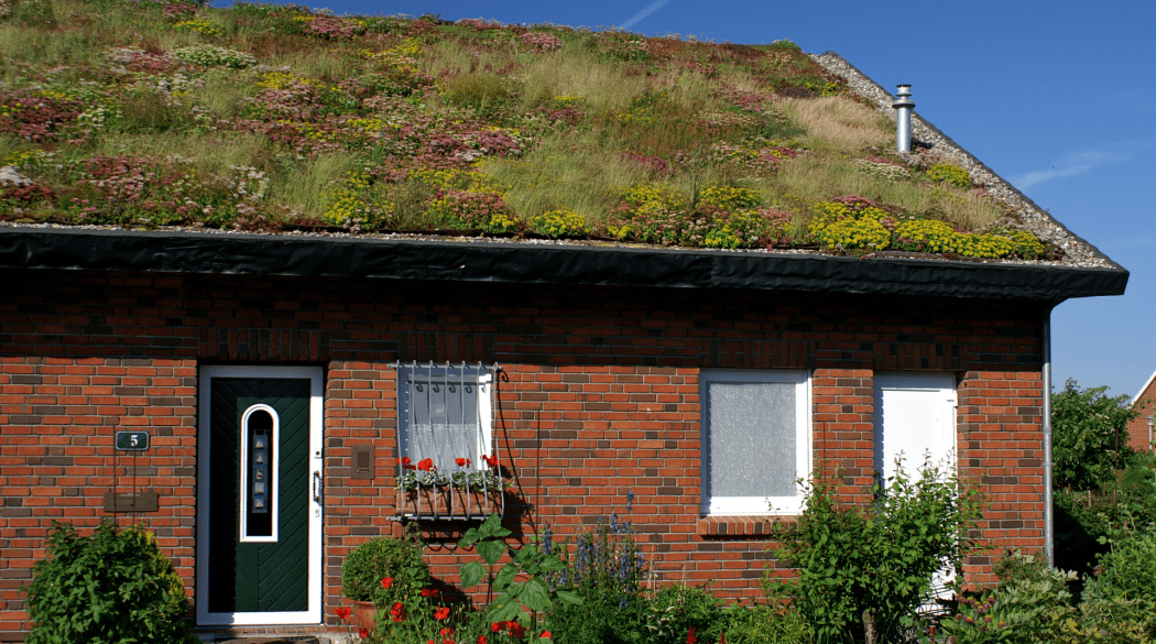 Rotes Backsteinhaus mit extensiver Dachbegrünung