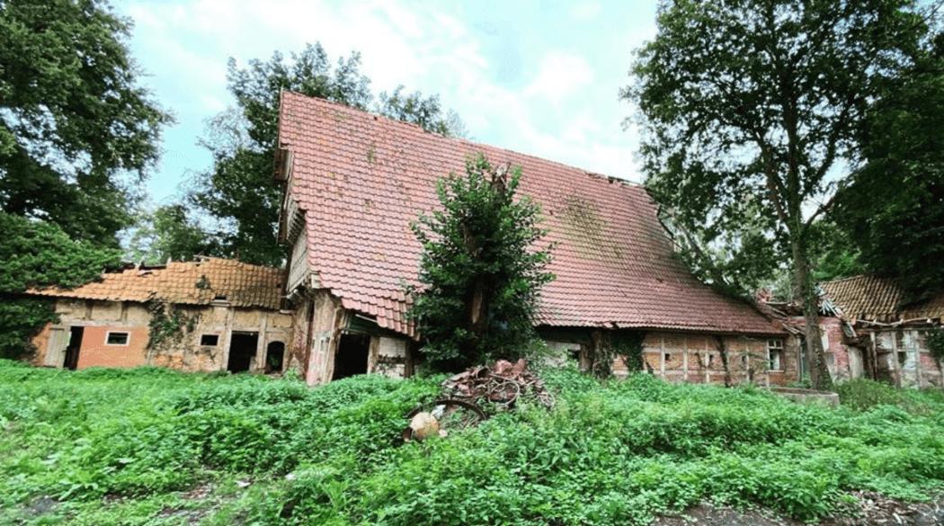 Resthof Talge: Seitenansicht Baum im Haus